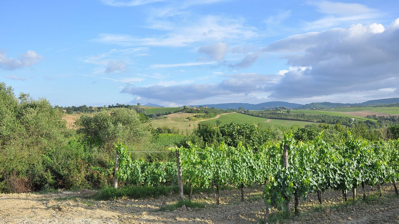 Pisa, Volterra, San Gimignano e Montalcino: un'esperienza sensoriale tra colline, storia e vino