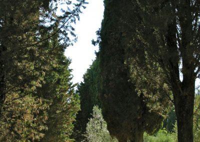 torre-belforti-5
